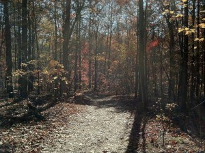 Turnback Trail